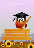 Owl graduate Royalty Free Stock Photo