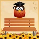 Owl graduate Royalty Free Stock Photos