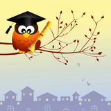 Owl graduate Stock Images