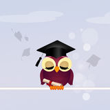 Owl graduate Stock Photography