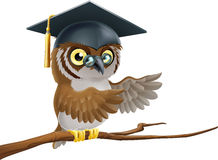 Owl graduate or teacher Royalty Free Stock Photography