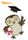 Owl graduate Stock Photos