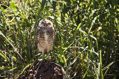 Owl. In the grass Stock Image