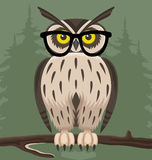 Owl on green background. Stock Images