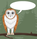 Owl on green background. Royalty Free Stock Images