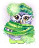 Owl in a green cap and scarf Royalty Free Stock Image