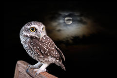 Owl in halloween night. Owl and full moon with cloud in halloween night Stock Images