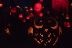 Owl Halloween Pumpkin royaltyfria bilder