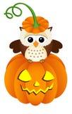 Owl in halloween pumpkin Stock Photography