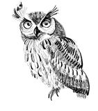 Owl hand-drawing on a white background Royalty Free Stock Photo