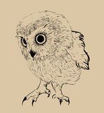 Owl hand drawn, black and white Stock Image