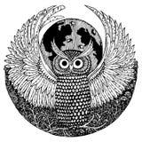 Owl. Hand drawn illustrations of owl stock illustration