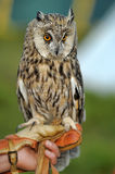 Owl on hand Royalty Free Stock Images