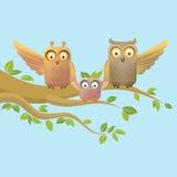 Owl happy family Stock Photography
