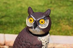 This owl has kept a close eye on the garden all summer stock photography