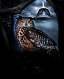 Owl and haunted house. A halloween theme of owl in trees with a haunted house with mists and the full moon in the background royalty free stock photos