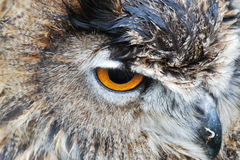 Owl head Stock Photography