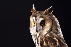 Owl head on black background Royalty Free Stock Images