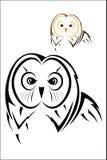 Owl head Royalty Free Stock Image