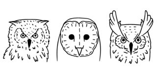 Owl heads in cartoon style. Set of three doodle bird heads vector illustration