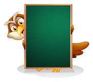 An owl hiding at the back of a blackboard Stock Image
