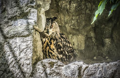 An Owl. Hiding behind a stone wall Stock Images