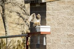 Owl Hopping Along alla scatola immagine stock libera da diritti
