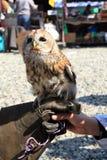 Owl in human hand Stock Photos
