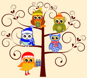 Owl Illustaions. Tree and owl with hats and scarves illustrations on pink background , blue owl, yellow owl, green owl, presents, gifts, brown tree, flora vector illustration