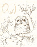 Owl illustation 1 Royalty Free Stock Images