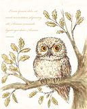 Owl illustation 4. Owl illustation. Hand drawn bird background Royalty Free Stock Image