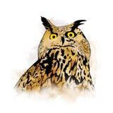 Owl Illustration Photo stock