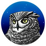 Owl Illustration. Illustration of an owl at night. royalty free illustration