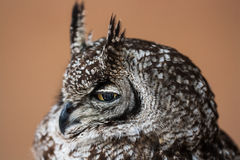 The owl Stock Images