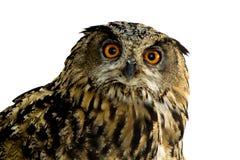 Owl isolated on white stock photos