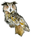 Owl isolated on white Royalty Free Stock Photos