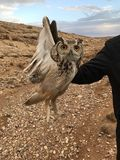 Owl at jordan stock photo