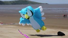 Owl Kite alla Weston-Eccellente-giumenta Somerset di festival stock footage