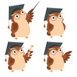 Owl lecture Stock Photos