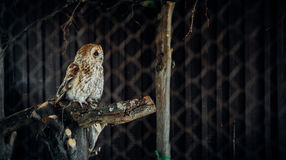 Owl at look Stock Photo