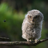 An owl Stock Photos