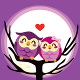 Owl Love Couple. Lovely cute owl couple perched together on a full moon night Royalty Free Stock Photos