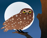 Owl and Moon stock photo