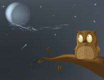 Owl the moon. A tree night Stock Images