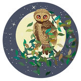 Owl and Moon Stock Images
