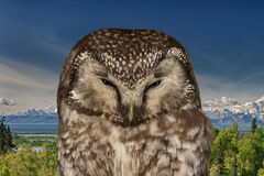 Owl on the mountain background. A full frame view royalty free stock photos