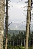 Owl Mountains The Witcher i Polen Royaltyfria Foton