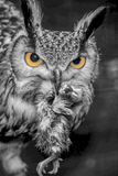Owl with mouse black whute Royalty Free Stock Images