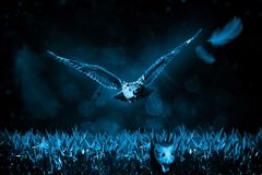 Owl, Mouse, Hunt, Night, Nature Royalty Free Stock Image