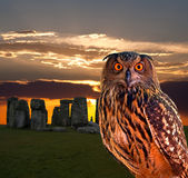 An owl and the mystery Stonehenge Royalty Free Stock Photography